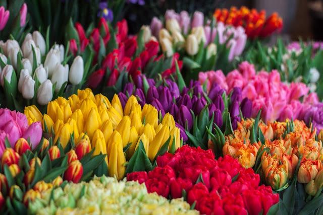 cosa vedere ad Amsterdam Bloemenmarkt