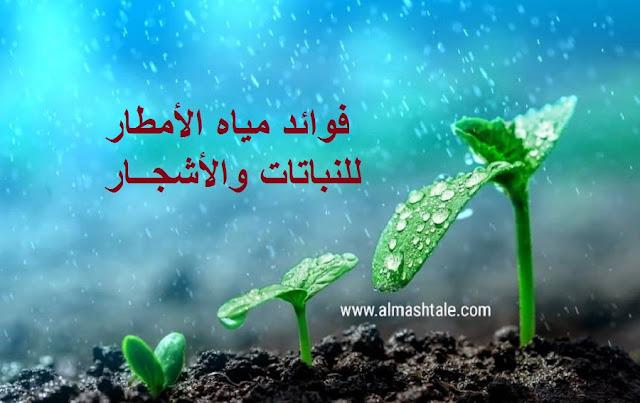 فوائد مياه الأمطار للشجر والنباتات