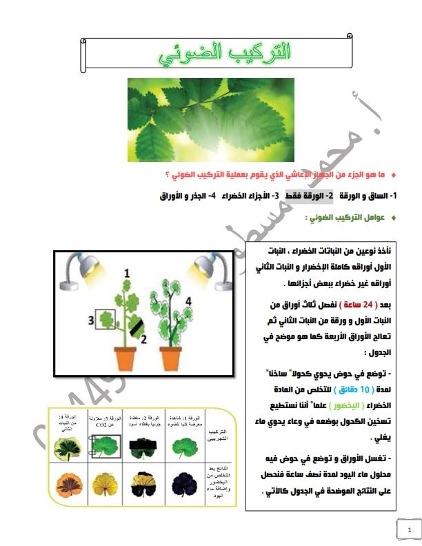 حل وملخص درس التركيب الضوئي للصف الثامن علوم الفصل الاول