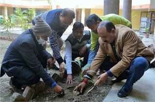पौधरोपण करके की गयी विश्व कल्याण की कामना | #NayaSaberaNetwork