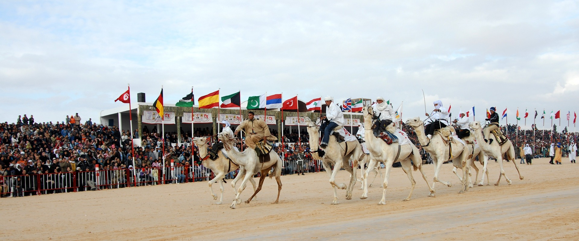 New app to auction camels released in Oman