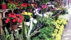 Cara Menanam Tanaman Bunga Hias Dan Analisa Usahanya