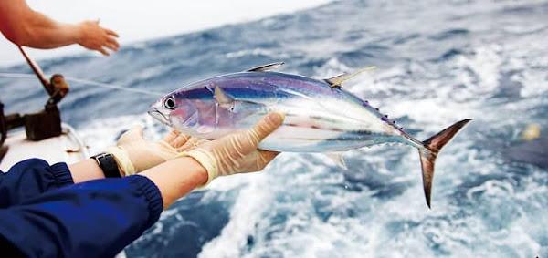 Tìm hiểu về kỹ thuật câu cá Ngừ đại dương