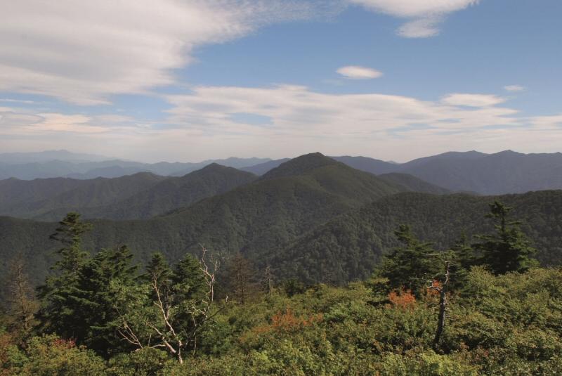 산림청, 5월의 국유림 명품숲으로 '계방산 운두령' 선정
