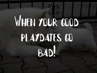 When your good playdates go bad!
