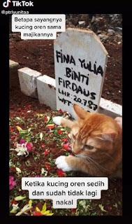 Warganet Ikut Sedih, Kucing Ini Menangis dan Termenung di Kuburan Majikannya