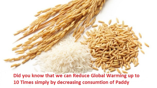interesting facts about paddy , paddy facts , rice facts , interesting facts about paddy