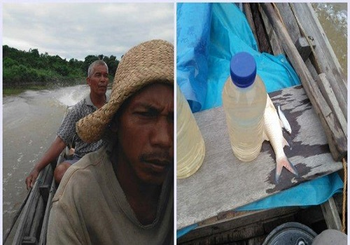 Nelayan Sungai Kembali Temukan Ikan Mati di Sungai Satui, Jumat (31/1/2020)