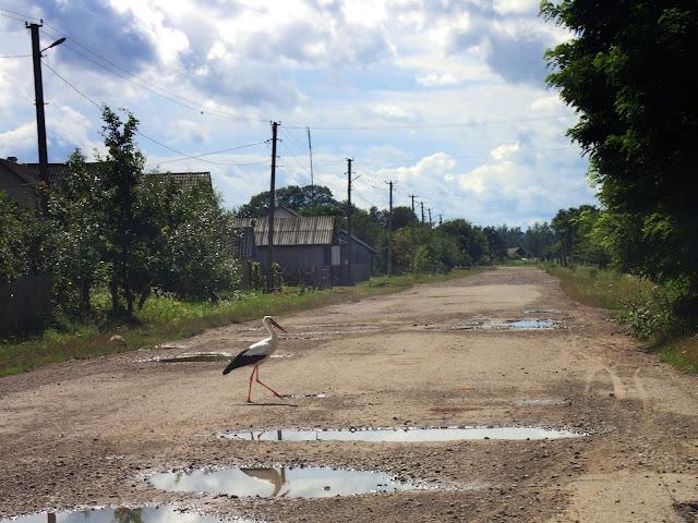 Okolice Czerniowców - po drodze spaceruje bocian i nikogo to nie dziwi