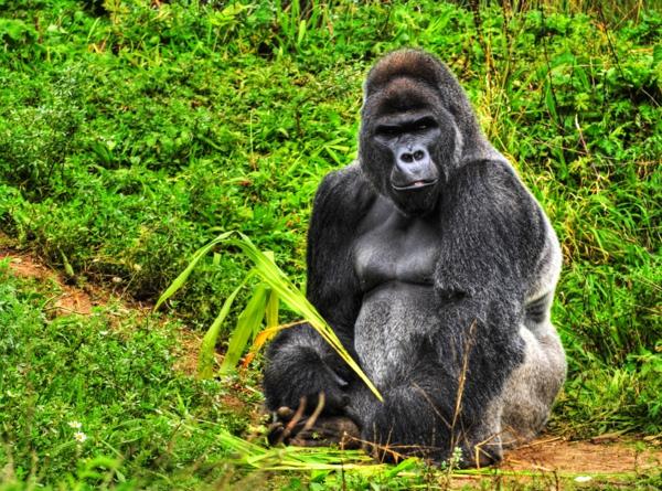 oddarena: Top 10 World's Most Endangered Animals