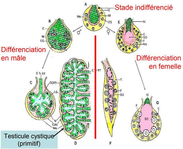 Biophysique cours pdf s3 audi