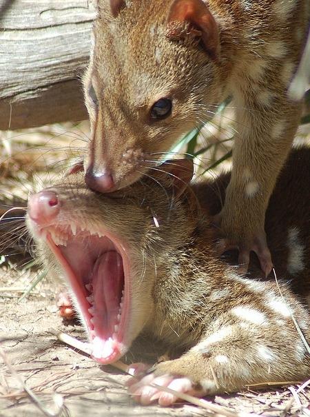 Tập tính giao phối đáng sợ và bạo lực nhất của động vật