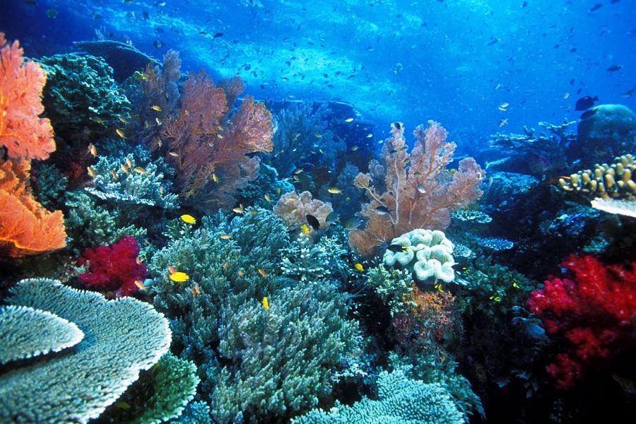 No Mar Profundo Fauna e flora marinhas nas Ilhas Raja
