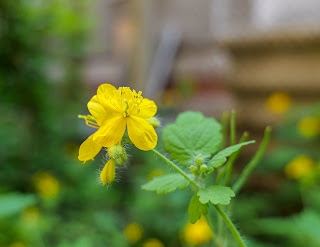 Lumix S5 camera test - flowers