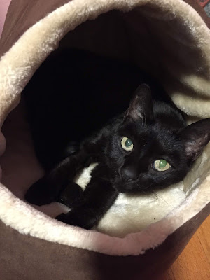 Cute black cat in fuzzy bed cave