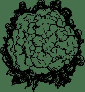 फूल  गोभी को अंग्रेजी में क्या कहते है