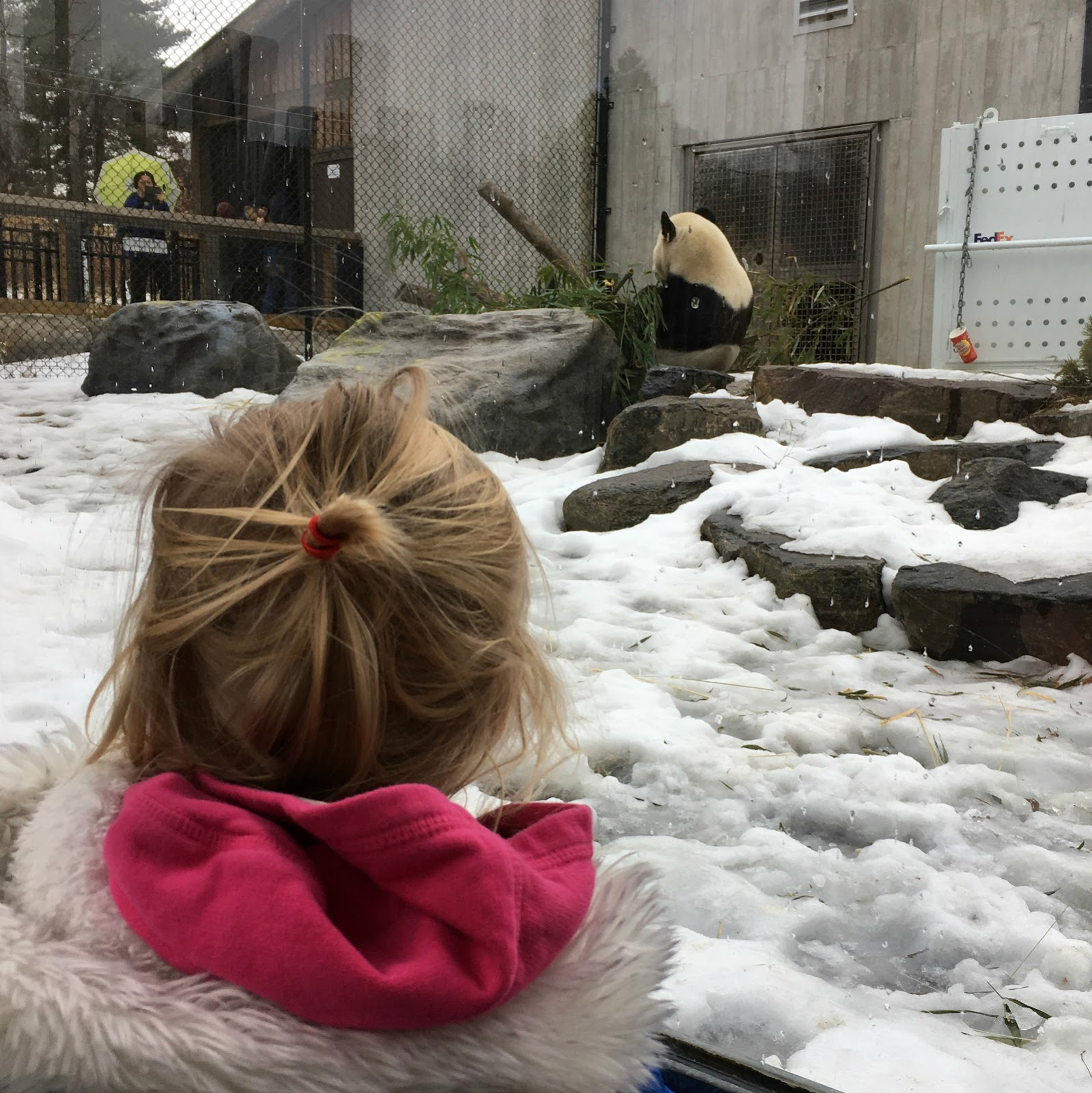 Toddler looking at panda at the Toronto Zoo