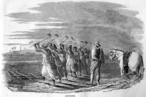 Jamaican slaves toiling in the field