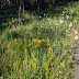 Meet biodiversiteit met de Biodiversiteitsstresstest