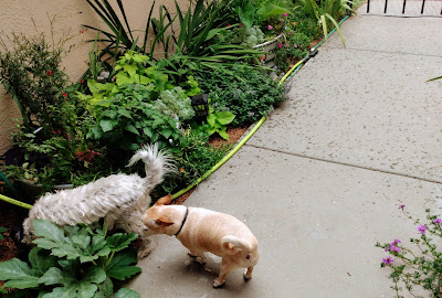 two small doggies