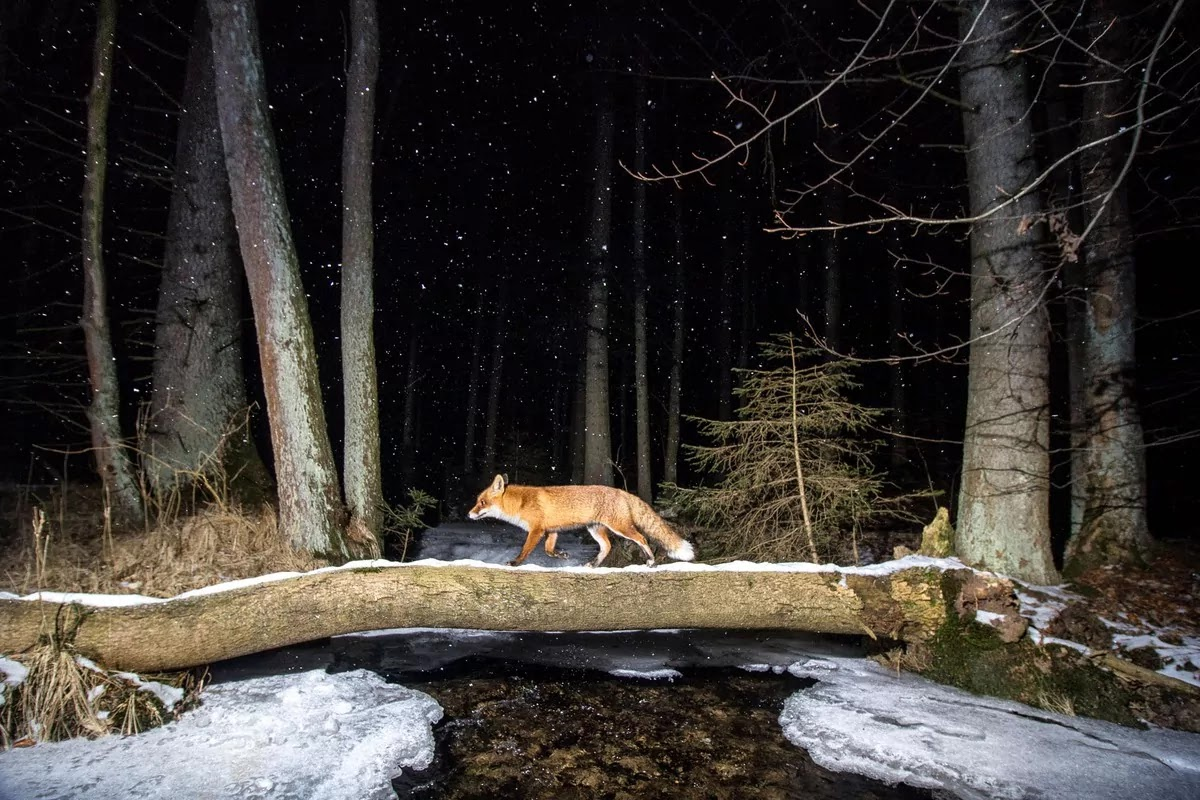 These Are The Winners Of The 2020 World Nature Photography Awards
