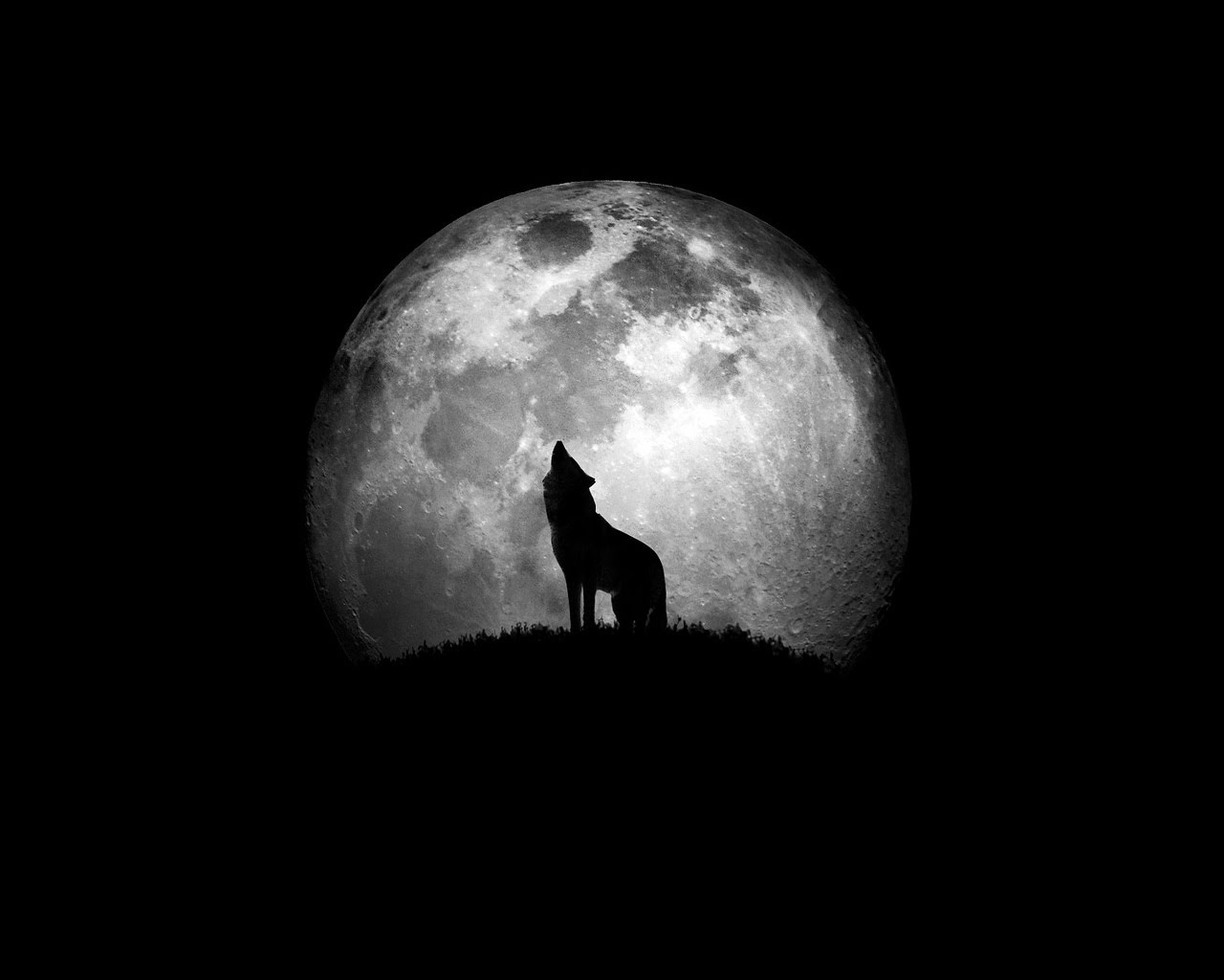 Guarida De Dos Lobos Aullando A La Luna
