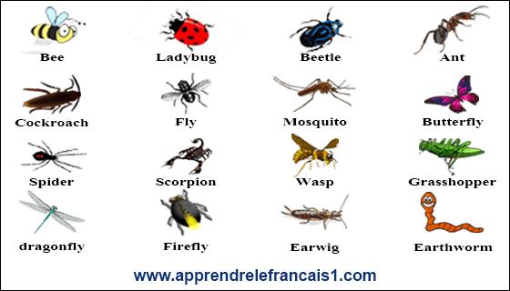 اسماء الحشرات بالانجليزية