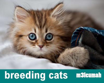 اضرار تربية القطط في المنزل و أضرارها على الإنسان