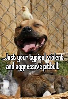 Dog Fun : Typical Violet and aggressive pitbull