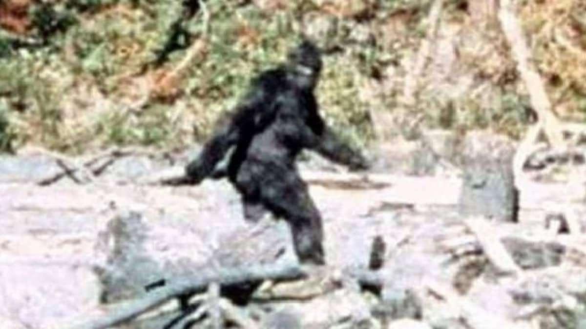 Sasquatch : 巨人のビッグフットは現実に存在するのか ? !、しないのであれば、マリファナ農園のバラバラ殺人は何だったのか ? !、未確認動物の真偽と猟奇的な惨殺事件を絡めたドキュメンタリーの謎解きシリーズ「サスクワッチ」の予告編 ! !