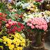 Toko Bunga Jogja: Inilah Bunga Hias Paling Populer untuk Ditanam di Halaman