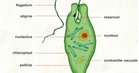 hogyan lehet lefolytatni a paraziták kezelési folyamatát a száj szaga mint a test megtisztítása