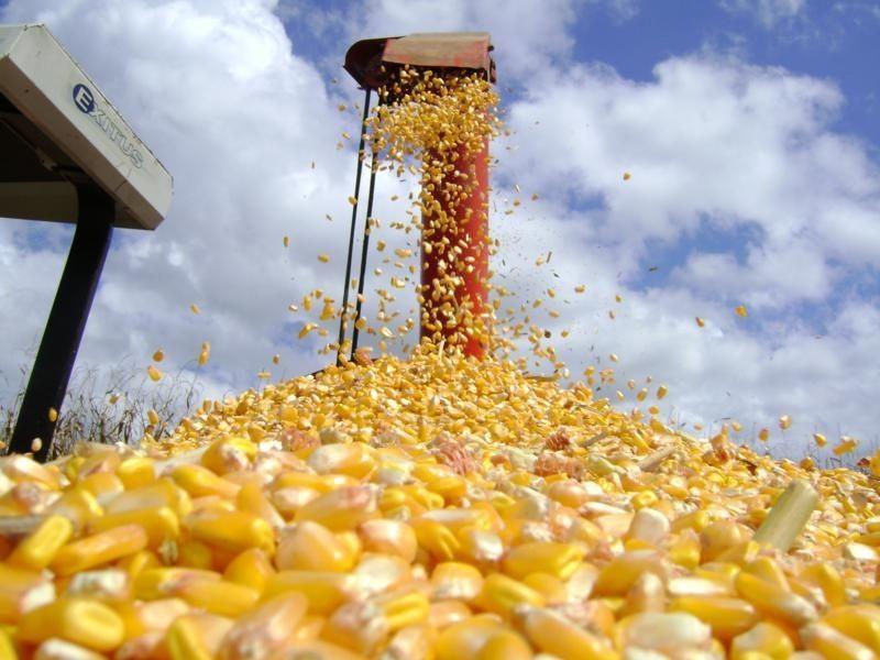 Governo deve isentar a tributação sobre importação de milho até o fim de julho