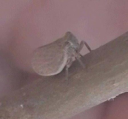 Αν αυτό που βλέπουμε στην φωτογραφία είναι μετ κάλφα τότε έχει πάει και στην Αρκαδία το έντομο... photos