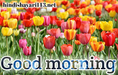 Beautiful nice good morning images for free download