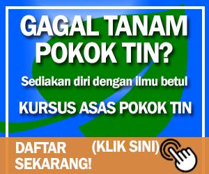 kursus pokok tin di tepi Putrajaya