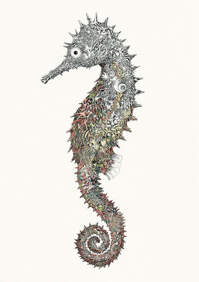 07-Spiny-Seahorse-Nathan-Ferlazzo-www-designstack-co