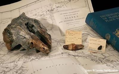 Fosil Spesies Baru Lumba-lumba Prasejarah Ditemukan