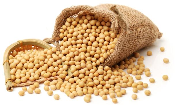 kacang kedelai, kedelai, manfaat kedelai, manfaat kacang kedelai, gizi kacang kedelai, nutrisi kacang kedelai