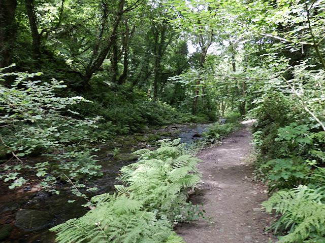 Walking through woods towards St, Nectan's Waterfall, Cornwall