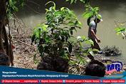 Warga Jember Digemparkan Penemuan Mayat Penuh luka Mengapung di Sungai