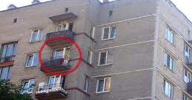 Женщина выкинула собаку своей подруги из окна 11-го этажа в Сочи