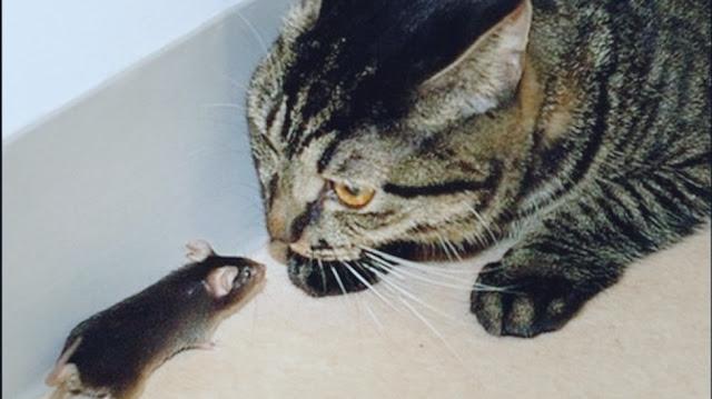 القط والفأر واسرار الكره بينهم