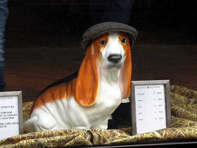 Dog with a cloth cap, Tommy Hilfiger Store, via Ricasoli, Livorno