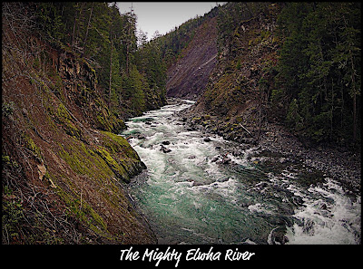 Elwha river olympic
