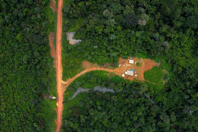 Big brands breaking pledge to not destroy forests: report