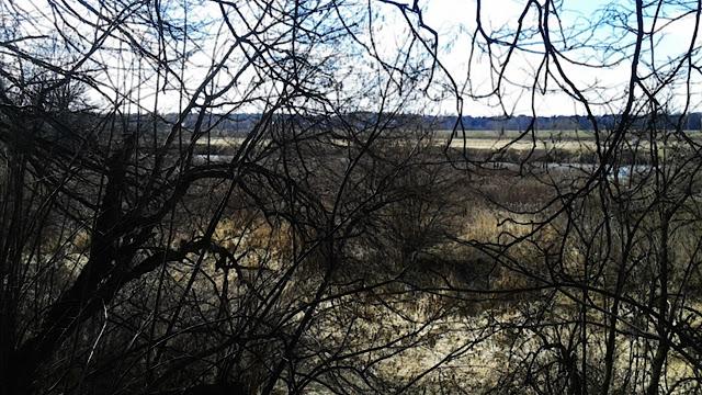 Za Tyńcem, widok na Wisłę/Skawinkę zza drzew