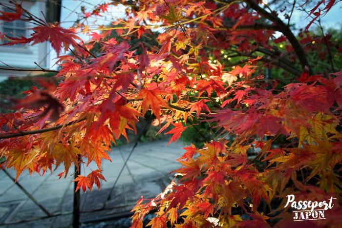 Koyo à Glover Garden, Nagasaki, Kyushu