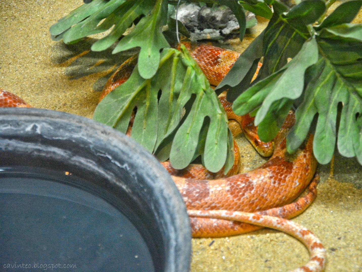 A 2 Z Reptiles Entree Kibbles:...