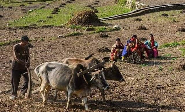 उत्तराखण्ड: कोरोना संकट से पहाड़ में बढ़ी रही है खेती की संभावना